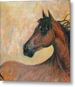 Kiger Mustang Metal Print