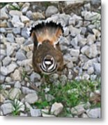 Kildeer And Nest Metal Print