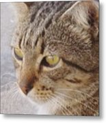 King Cat Metal Print