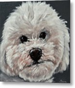 King Cavalier And Toy Poodle Mix Metal Print