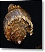 King Conch 2 - Photosbydm Metal Print