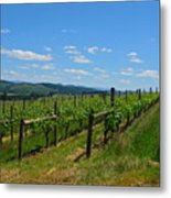 King Estate Vineyard Metal Print