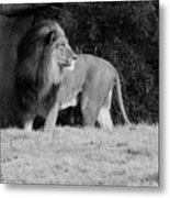 King Of Beasts Black And White Metal Print