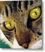 King Of The Cats Metal Print