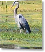 King Of The Marsh Metal Print
