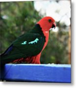 King Of The Parrots Metal Print