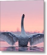 King Of The Water And The Sunset  Metal Print