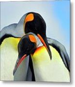King Penguin Metal Print by Tony Beck