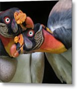 King Vultures' Love Metal Print