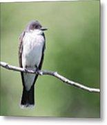 Kingbird Metal Print