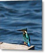 Kingfisher On The Dock Metal Print