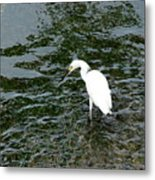 Kingston Jamaica Egret Metal Print