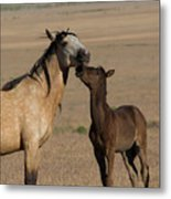 Kiss For Mom  Metal Print by Nicole Markmann Nelson