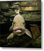 Kiss Me You Fool Metal Print