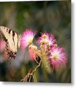 Kiss Of Butterfly Metal Print