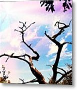 Kiss Of Spring Hues Metal Print