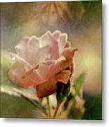 Kissed By A Rose Metal Print