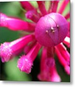 Kissing Flower Metal Print