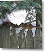 Kissing On A Fence Metal Print