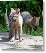 Kit Fox12 Metal Print