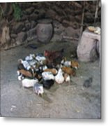 Kitchen Livestock 2 Metal Print