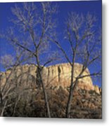 Kitchen Mesa And Bare Cottonwood Trees Metal Print