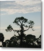 Kite In The Tree Metal Print