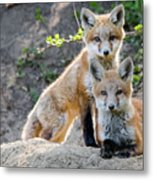 Kits At Rest Metal Print