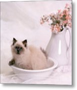 Kitten Bath Metal Print by Crystal Garner