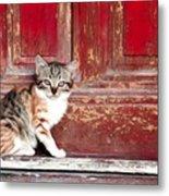 Kitten By Red Door Metal Print