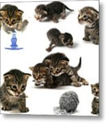 Kitten Collage Metal Print