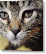 Kitten Curiosity Metal Print