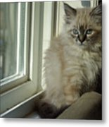Kitten Daydreams Metal Print