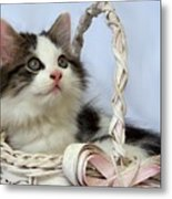 Kitten In Basket Metal Print