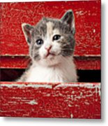 Kitten In Red Drawer Metal Print by Garry Gay