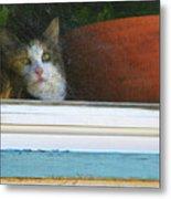 Kitten In The Window 2 Metal Print