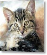 Kitten Looking Metal Print