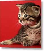 Kitten On Red Metal Print