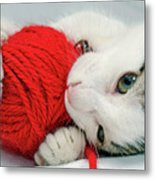 Kitten Playing With Red Ball Of Yarn Metal Print