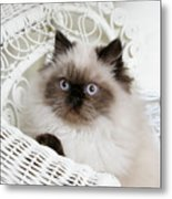 Kitten Portrait Metal Print
