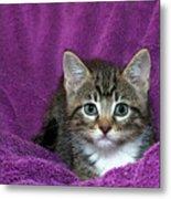Kitten, Purr-fect In Purple Metal Print