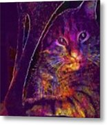 Kitten Red Cat Cat Tom Cat Pets  Metal Print
