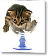 Kitten Sits In A Glass  Metal Print