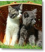 Kitten Smells Something Good Metal Print