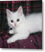 Kitten Snow White On Green And Pink Plaid Metal Print