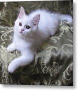 Kitten Snow White Silky Fur Metal Print