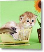 Kitten With Flover Metal Print