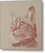 Kitten Wonder Metal Print