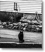 Kitty Across The Street Black And White Metal Print
