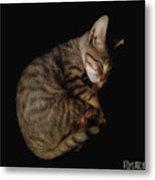 Kitty Cat Curls Up Metal Print